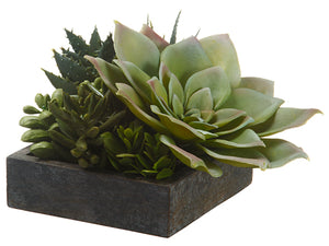 "4""Hx5""Wx5""L Succulent Garden in Paper Mache Pot Green Burgundy (pack of 2)"