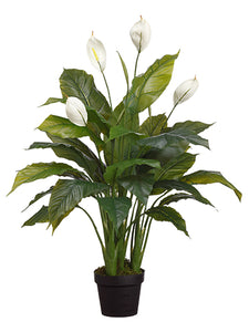 "42"" Spathiphyllum Plant in Pot Green White (pack of 4)"