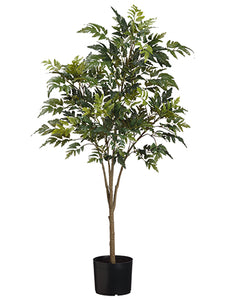 "45"" Aralia Tree x4 in Pot  Green (pack of 4)"