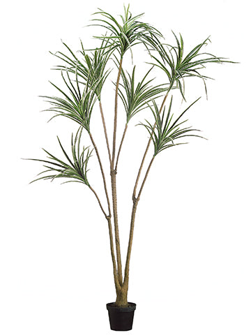 6' Yucca Tree  Green Cream (pack of 2)