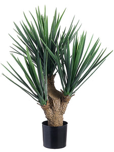 "26"" Yucca Plant x3 in Pot With 107 Leaves Frosted Green (pack of 2)"