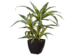 "24"" Dracena Plant in Plastic Pot Green Grey (pack of 4)"