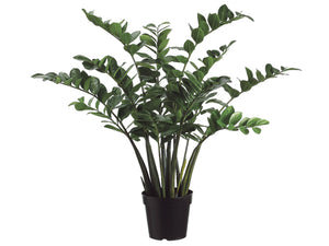 3' Zamioculcas Zamiifolia Plant x10 With 154 Leaves in Plastic Pot Two Tone Green (pack of 1)