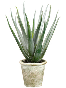 "20"" Agave in Paper Mache Pot  Green Gray (pack of 2)"