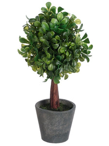 "10"" Boxwood Ball-Shaped Topiary in Paper Mache Pot Green (pack of 12)"