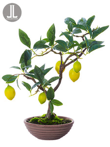 "17"" Lemon Bonsai in Clay Pot  Yellow Green (pack of 4)"