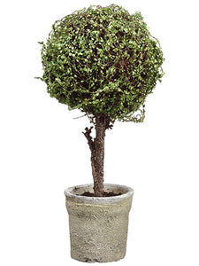 "19"" Baby's Tear Ball Topiary in Pot Green (pack of 4)"