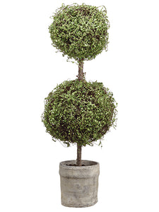 "30.5"" Baby's Tear Double Ball Topiary in Pot Green (pack of 1)"