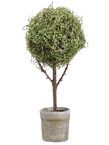 "26.5"" Baby's Tear Ball Topiary in Pot Green (pack of 1)"