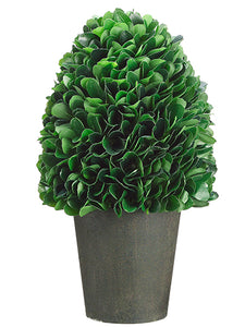 "10"" Dried Look Boxwood in Paper Mache Pot Green (pack of 2)"