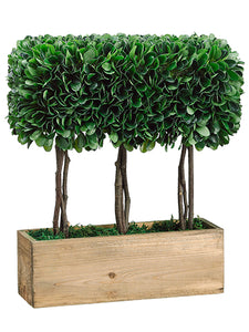 "15"" Dried Look Boxwood Topiary in Wood Container Green (pack of 2)"