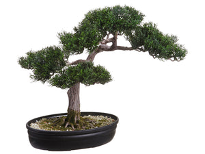 "16"" Cedar Bonsai in Plastic Pot Green (pack of 4)"