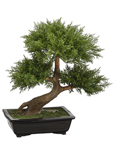 "20"" Cedar Bonsai in Pot  Green (pack of 1)"