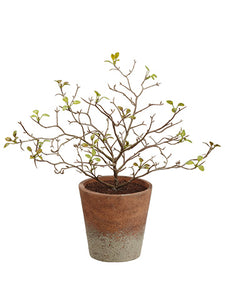 "10"" Corokia Leaf Plant in Paper Mache Pot Green (pack of 12)"