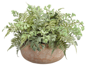 "14"" Mixed Fern in Terra Cotta Pot Green (pack of 1)"