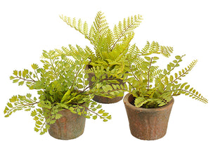 "6.5"" Soft PE Fern in Terra Cotta Pot Assortment (3 ea/set) Two Tone Green (pack of 5)"