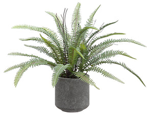 "16"" Sword Fern in Cement Pot  Green (pack of 6)"