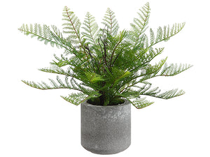 "15"" Lace Fern in Cement Pot  Green (pack of 6)"