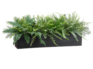 "16""H Mixed Fern in Wood Box  Green (pack of 1)"