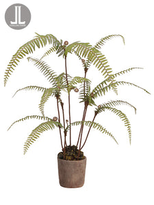 "39"" Dicranopteris Fern Plant in Clay Pot Green (pack of 1)"