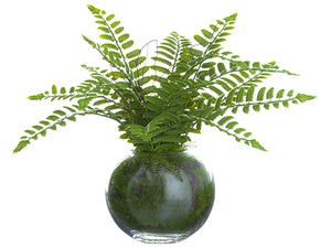 "12"" Boston Fern Plant in Glass Vase Green (pack of 4)"