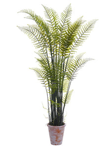 "82"" Forest Fern Plant in Paper Mache Pot Green (pack of 1)"