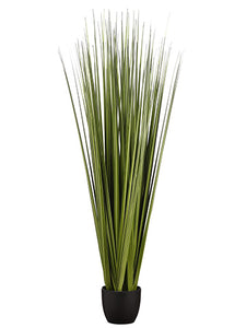 "66"" Reed Grass Bundle x6 in Pot Dark Green (pack of 1)"