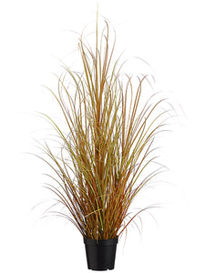 "39"" Grass Bush in Pot  Green Rubrum (pack of 6)"