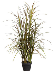 "48"" Grass Plant in Plastic Pot Burgundy Green (pack of 1)"