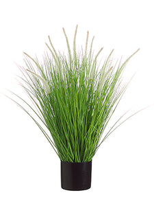 "34"" Dog Tail Onion Grass x12 in Pot Green Cream (pack of 4)"