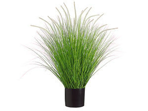 "39"" Dog Tail Onion Grass x18 in Pot Green Cream (pack of 2)"