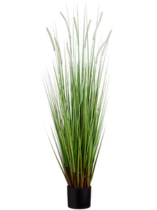 "48"" Dog Tail Grass x9 in Pot  Green Brown (pack of 4)"