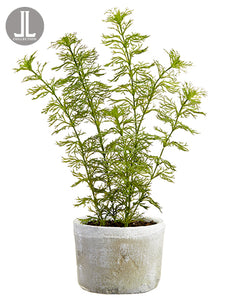 "16"" Dill in Clay Pot  Green Gray (pack of 6)"