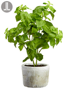 "15.5"" Basil in Clay Pot  Green (pack of 6)"