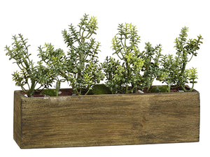 "6.5""Hx10""L Thyme in Wood Box  Green (pack of 4)"