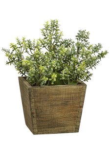 "8""Hx4.25""L Thyme in Wood Pot  Green (pack of 4)"