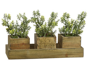 "6.5hx11.7""L Thyme in Box x3 on Wood Tray Green (pack of 4)"