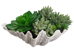 "6"" Succulent Garden in Shell  Green (pack of 4)"