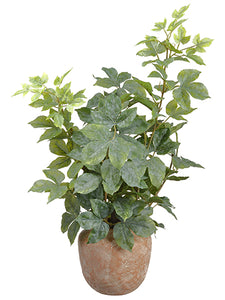 "28"" Cissus Ivy Plant in Terra Cotta Pot Green (pack of 2)"