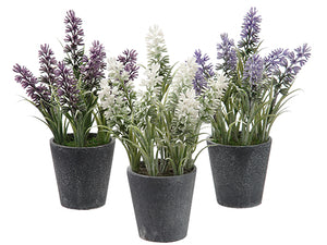 "8"" Lavender in Paper Mache Pot (3 Colors/Assorted) Assortment (pack of 12)"