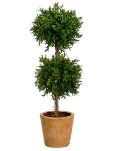 "24"" Tea Leaf Double Ball Topiary in Terra Cotta Pot Green (pack of 2)"
