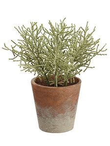 "8"" Spanish Moss in Paper Mache Pot Green Gray (pack of 12)"