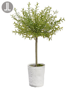 "18"" Myrtle Topiary x1 in Clay Pot Green (pack of 6)"