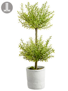 "24"" Myrtle Topiary x2 in Clay Pot Green (pack of 4)"