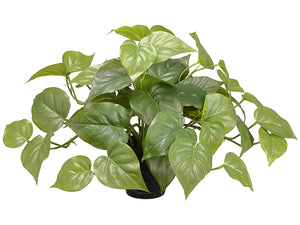 "9.5"" Philodendron Plant in Plastic Pot Green (pack of 24)"