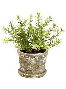 "10"" Flowering Rosemary in Cement Pot Green Lavender (pack of 4)"