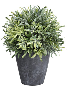 "8"" Rosemary Ball in Pot  Green (pack of 4)"