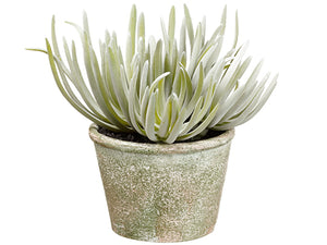 "6.5"" Senecio in Paper Mache Pot Green Gray (pack of 6)"