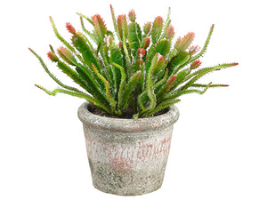 "9"" Cactus in Clay Pot  Green Burgundy (pack of 6)"
