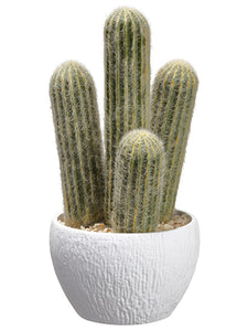 "10"" Column Cactus in Plastic Pot Green Gray (pack of 4)"
